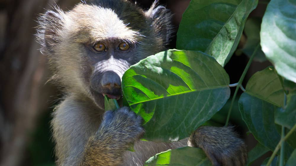 Tanzania safari: 'The golden rule for capturing wildlife? Be