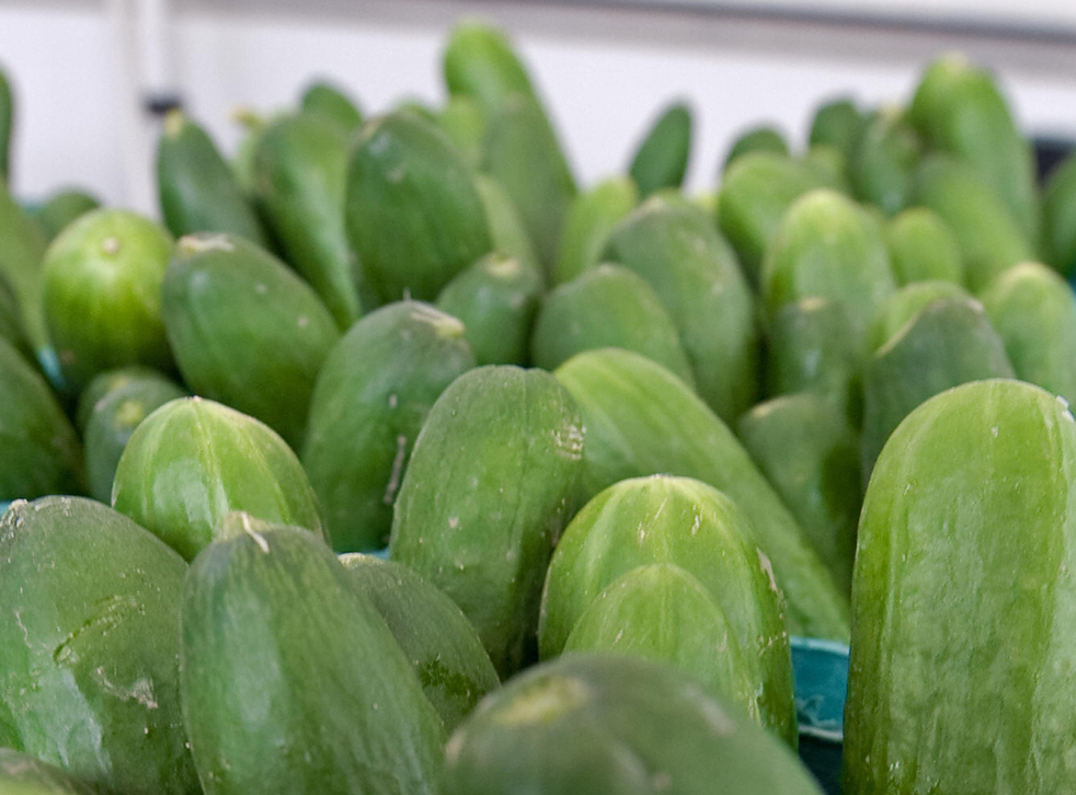36 cucumbers have been found around the Hampstead Garden Suburb area