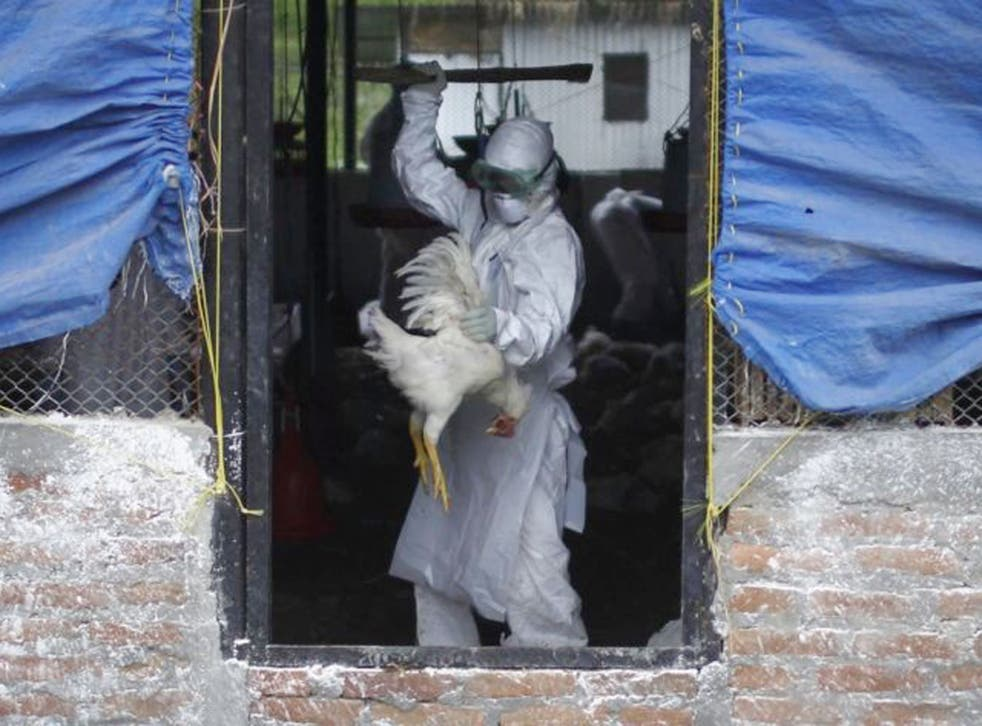 Britain was previously declared free of avian influenza in 2017