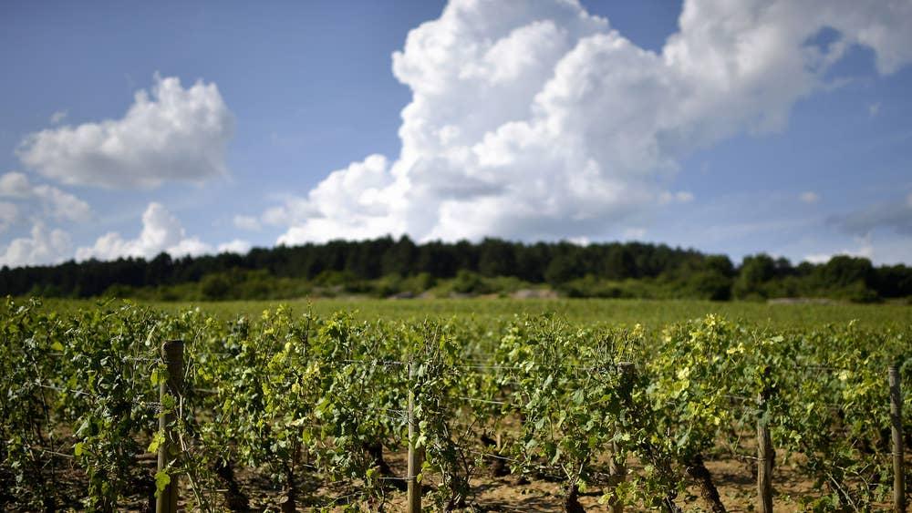 Après le déluge: Bordeaux's winemakers fight back | The