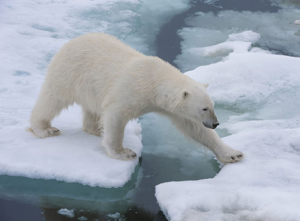 Scientists are more certain than they have ever been that humans are causing climate change