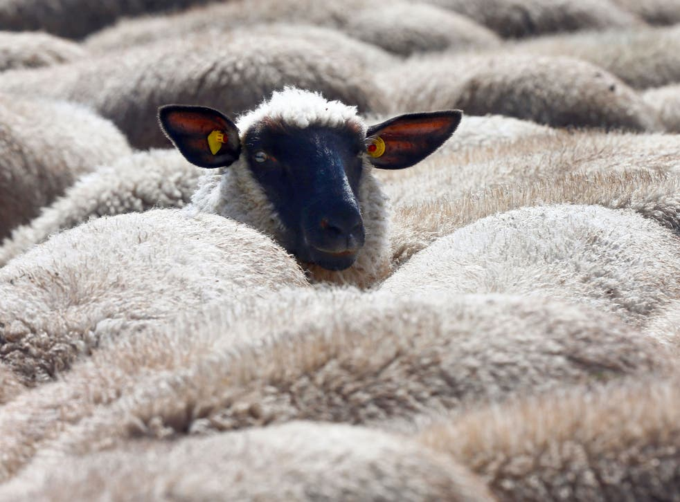 A man has been found guilty of trying to have sex with a sheep next to the Tottenham Hotspurs FC training ground