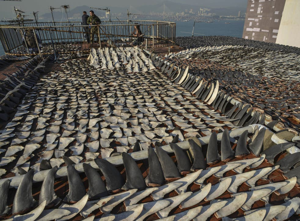 The roof of a Hong Kong factory building is covered in drying shark fins.