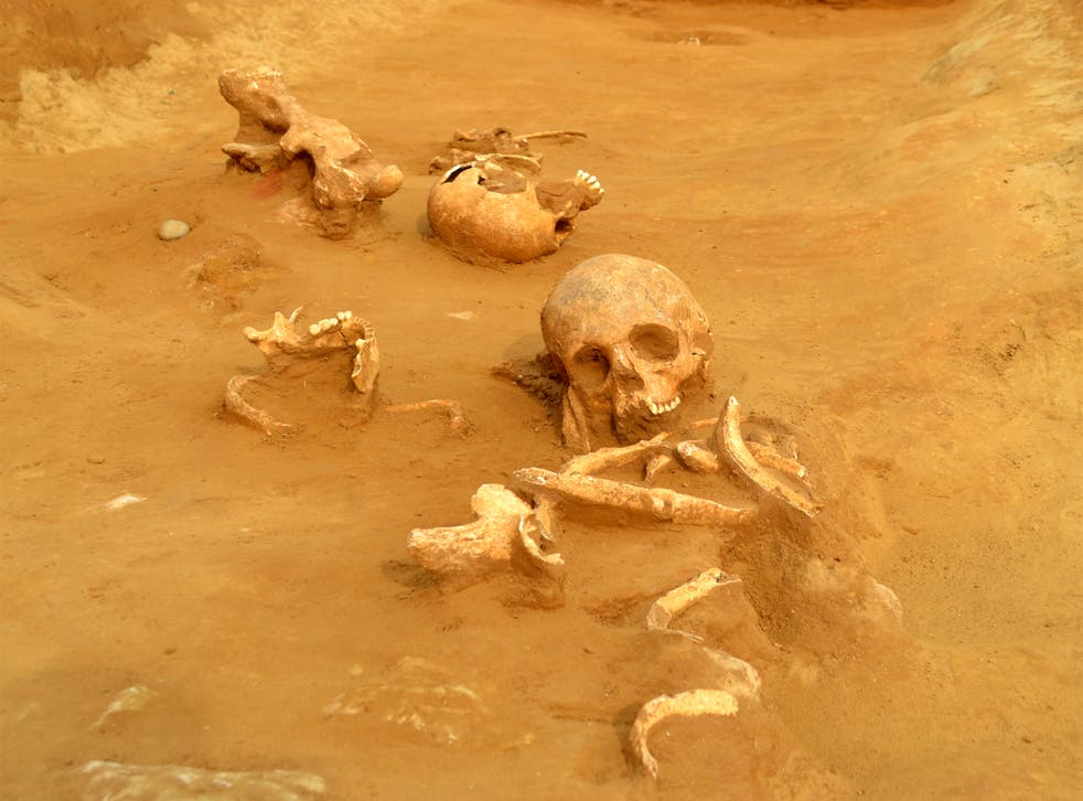 Excavated remains of the heads and necks of three late Iron Age individuals thrown into an enclosure ditch
