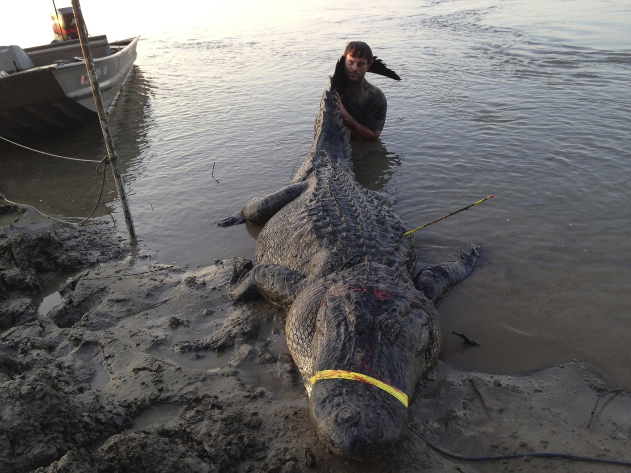 Alligator hunters caught the heaviest and longest reptile