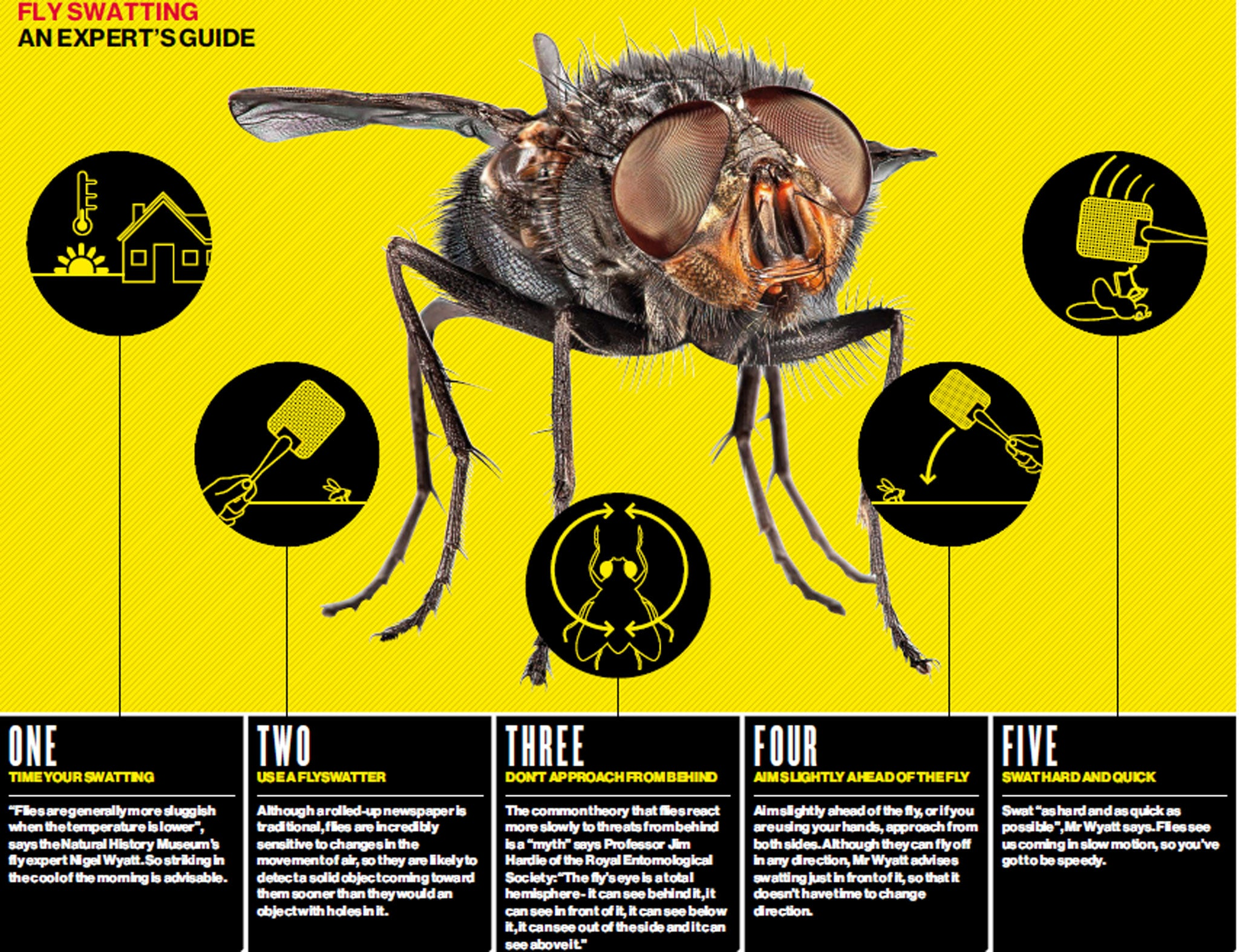 How to get bugs out Complicated Our advice will save you from this misfortune