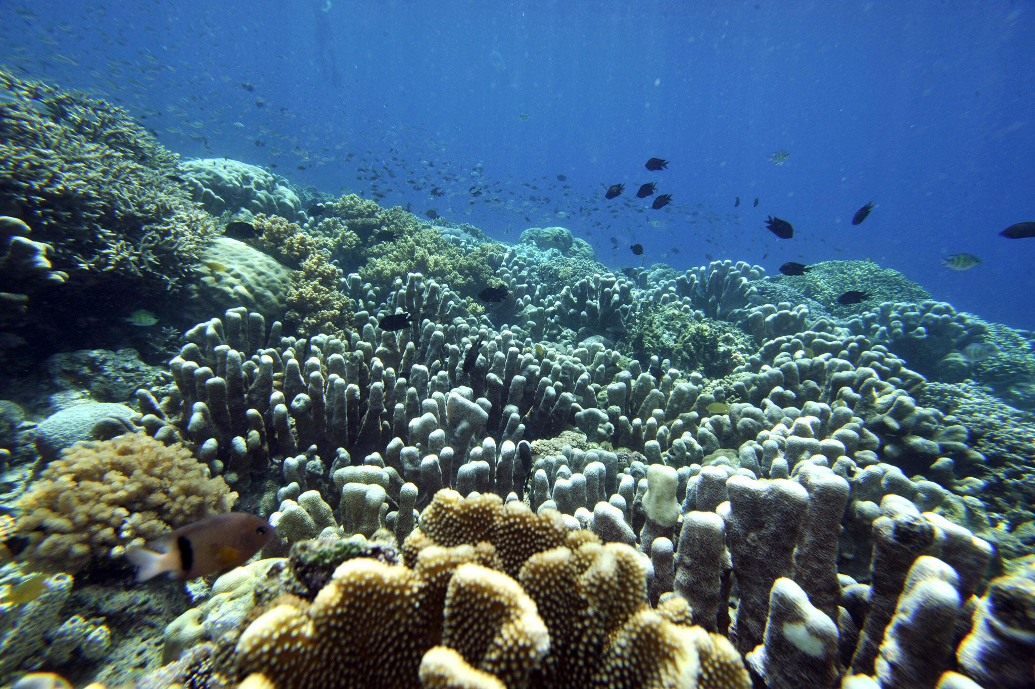 The health of our oceans is 'spiralling downward', and still we act like nothing is the matter