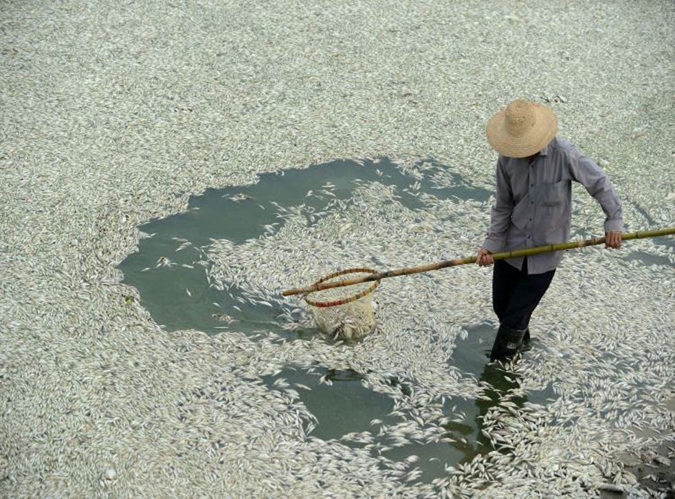 Clean up: nearly 20 per cent of all of China's rivers are now so polluted that they are unsafe to touch
