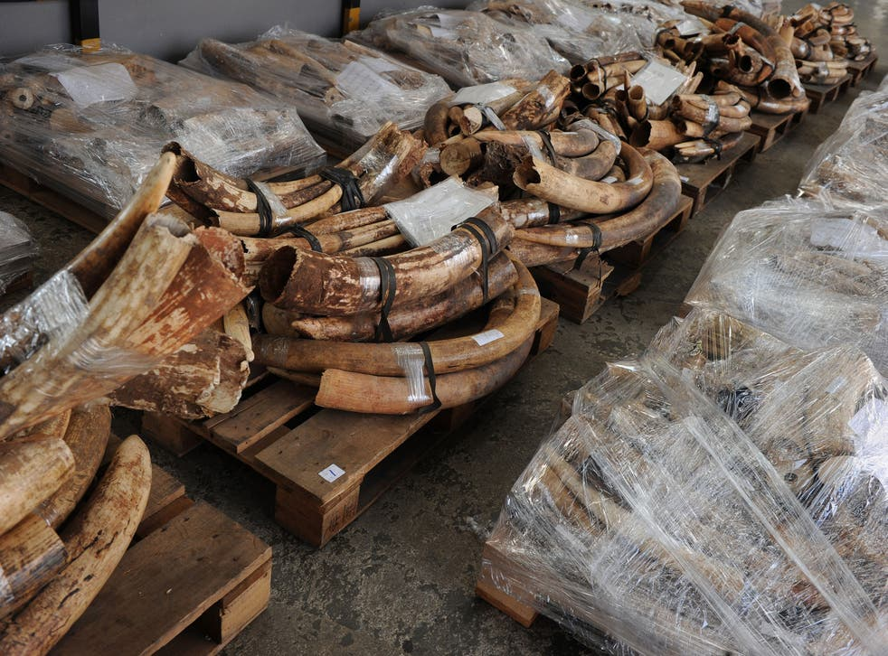 Seized ivory tusks are displayed in Hong Kong. File photo