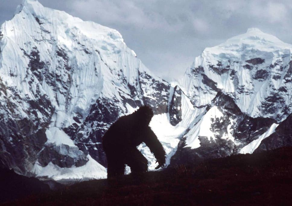 DNA study shows yeti is real (sort of) – and Oxford scientist
