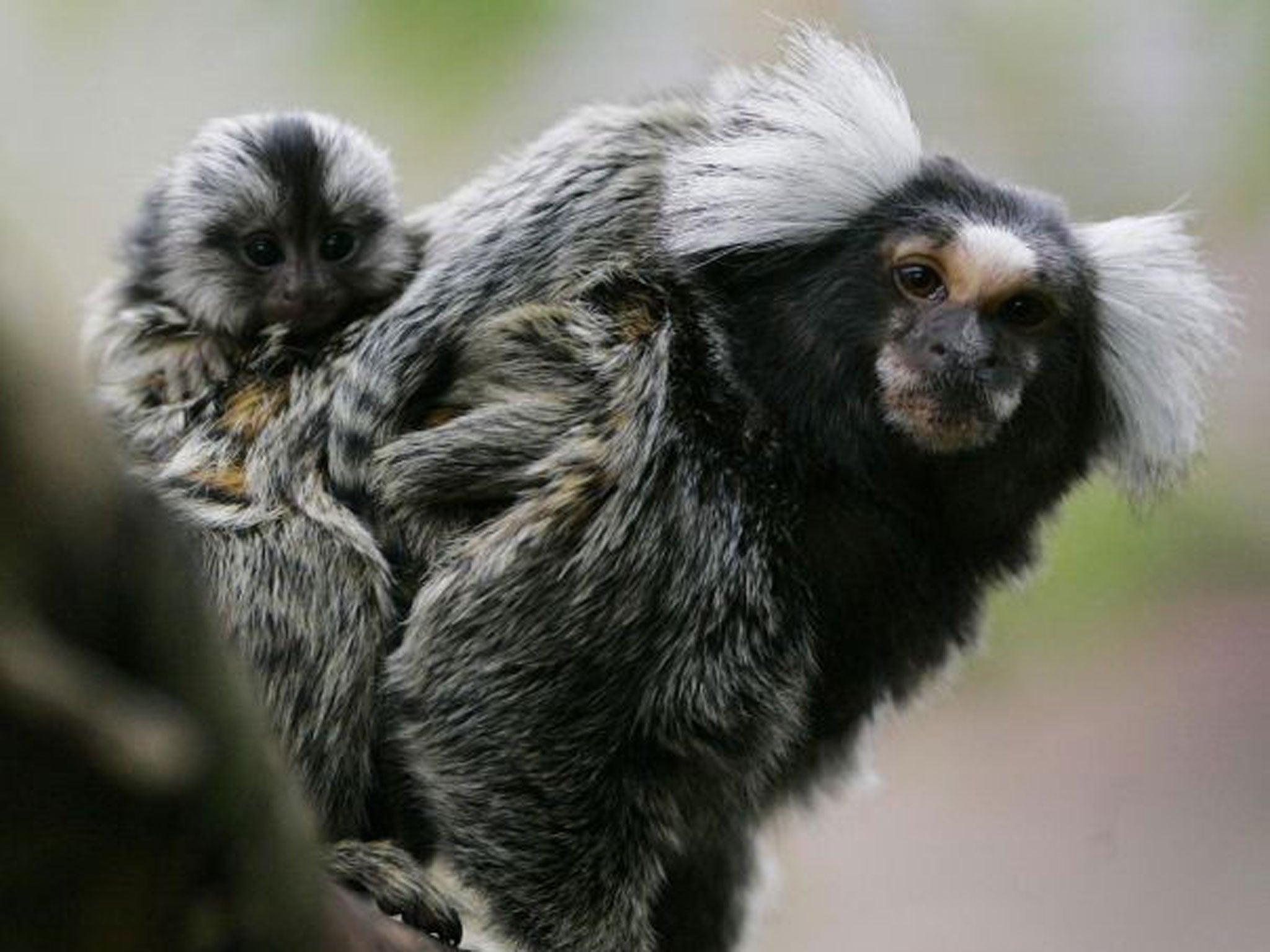 Cheeky monkey girl wrestling music piercings hair dying concert