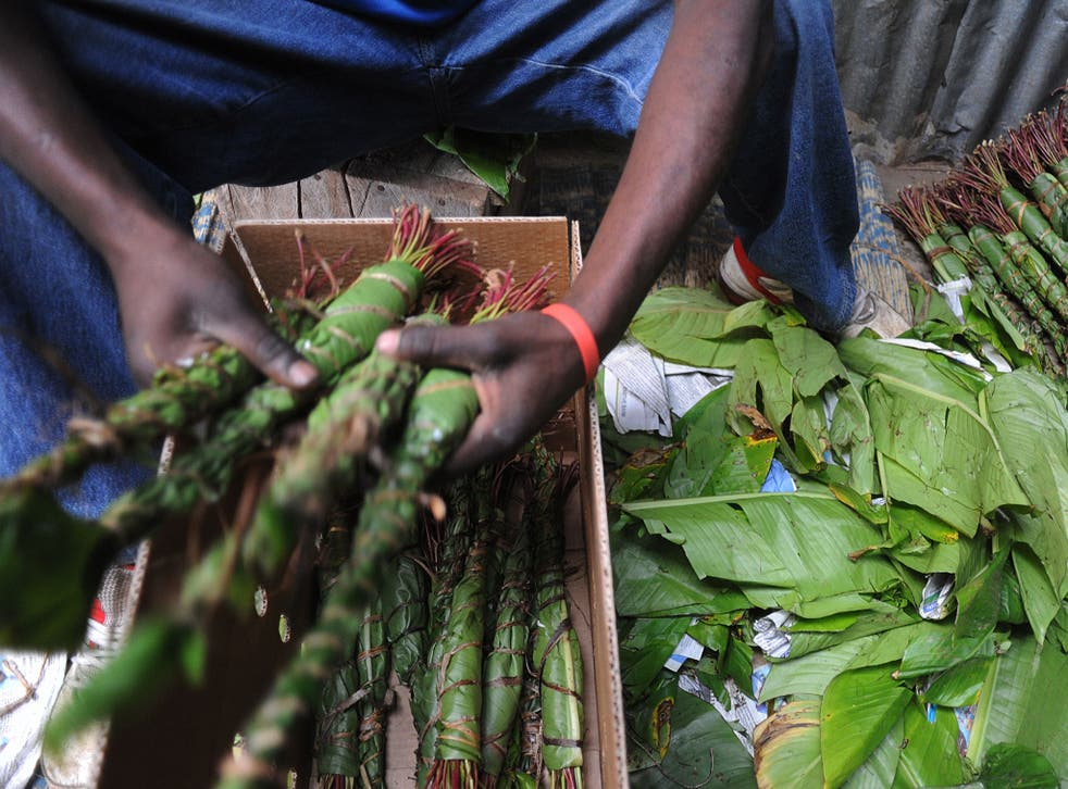Khat is the leaves and shoots of the shrub Catha edulis, which are chewed to obtain a mild stimulant effect (AFP/Getty)