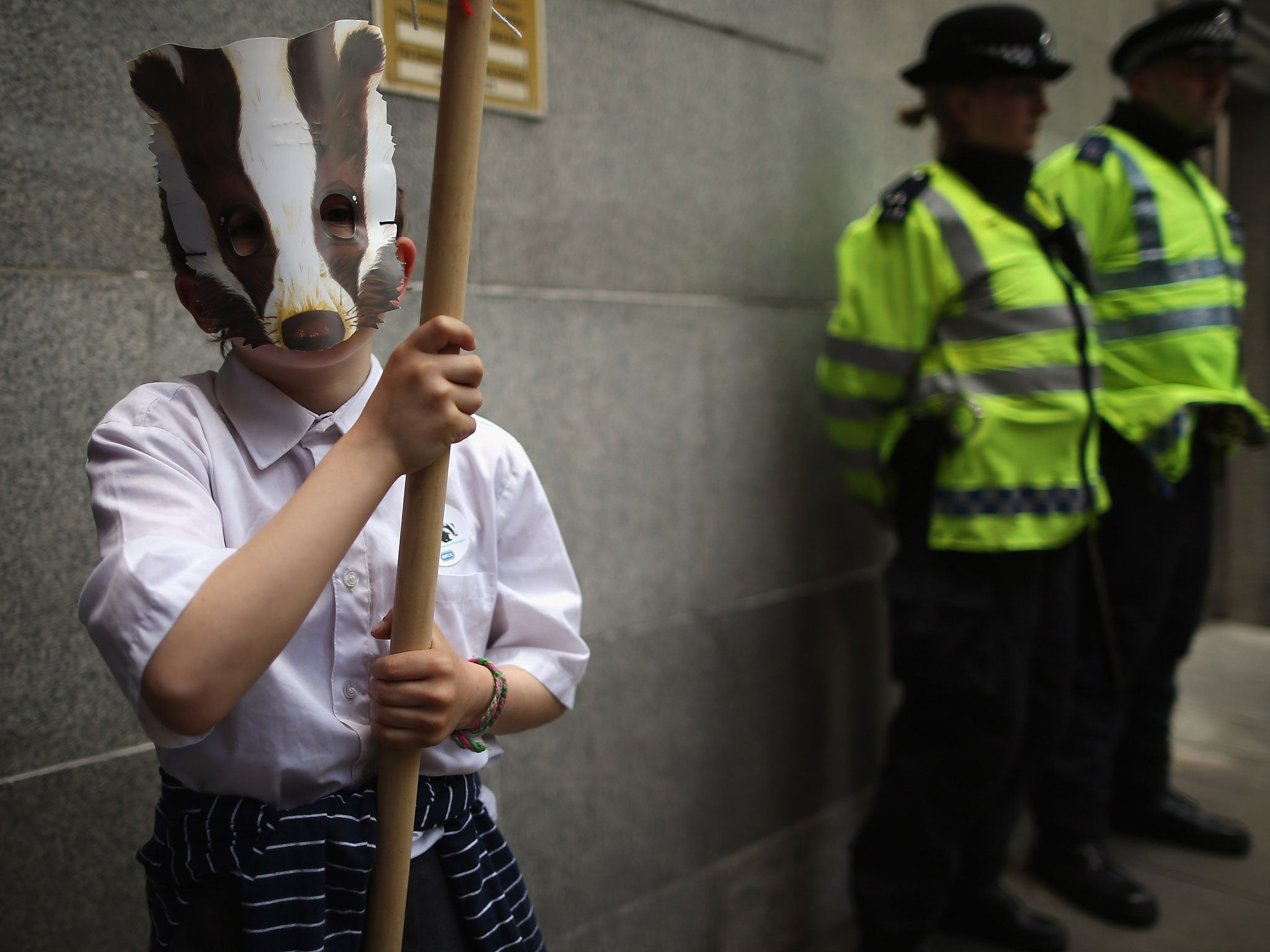 Chief vet under fire for badger cull advice | The Independent