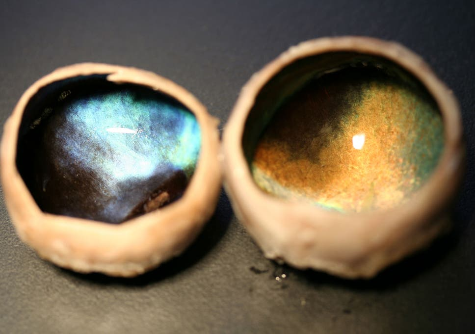 British Scientists Discover Reindeer Eyes Change Colour From Gold To