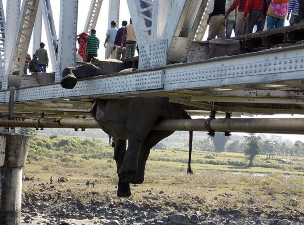 The carcass of one of the elephants killed after being hit by a speeding train hangs from a railway bridge inside the Chapramari Forest in Jalpaiguri district, about 670 km (415 miles) from Kolkata, India