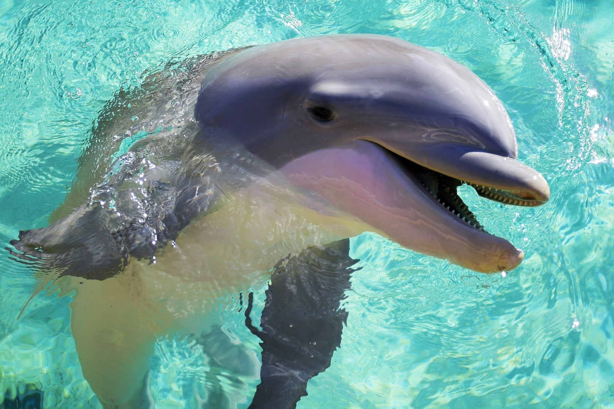the video of a dolphin is shocking but is it just because it