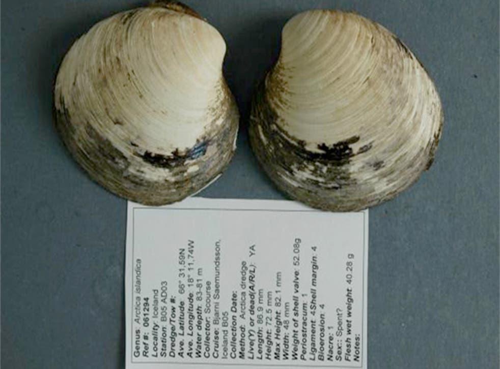 Ming the clam (Credit: Bangor University)