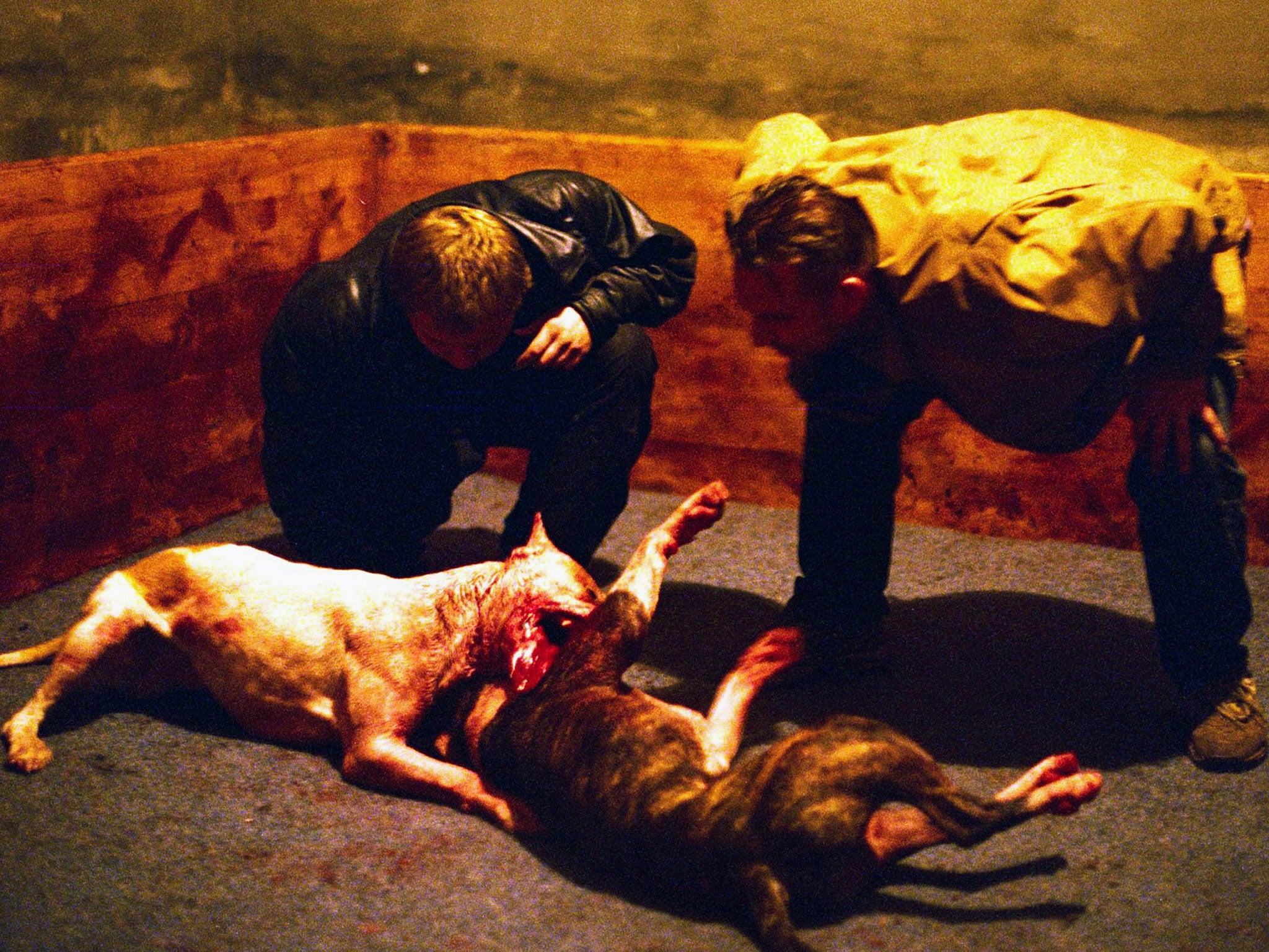 A Terrifying Encounter With The Brutal World Of Dog Fighting The