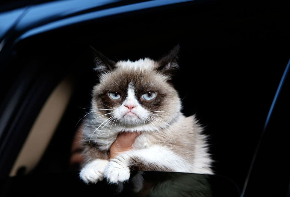 Click To Follow The Independent Grumpy Cat Aka Tardar Sauce Would Probably Ignore You Too