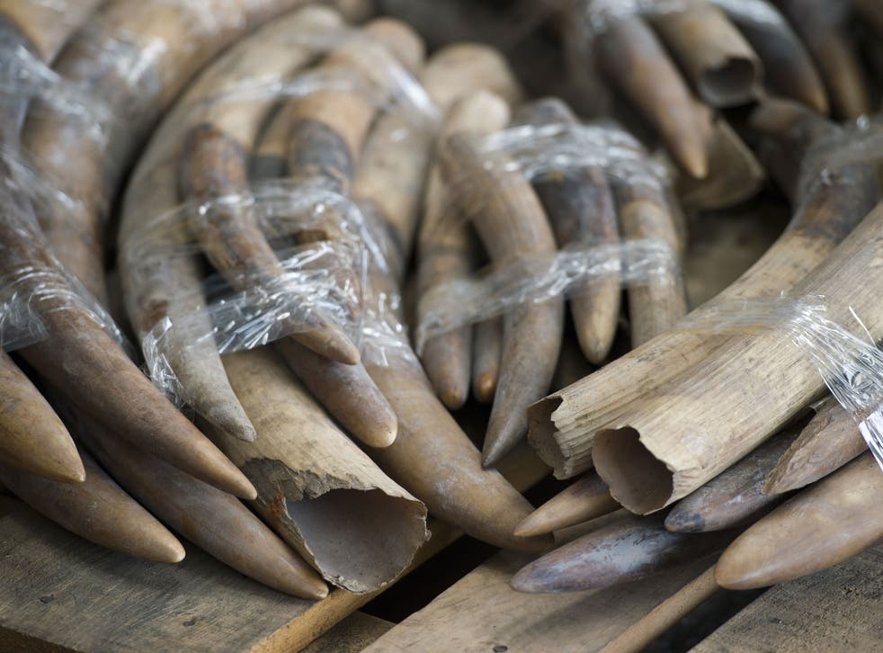 Seized ivory tusks in Hong Kong