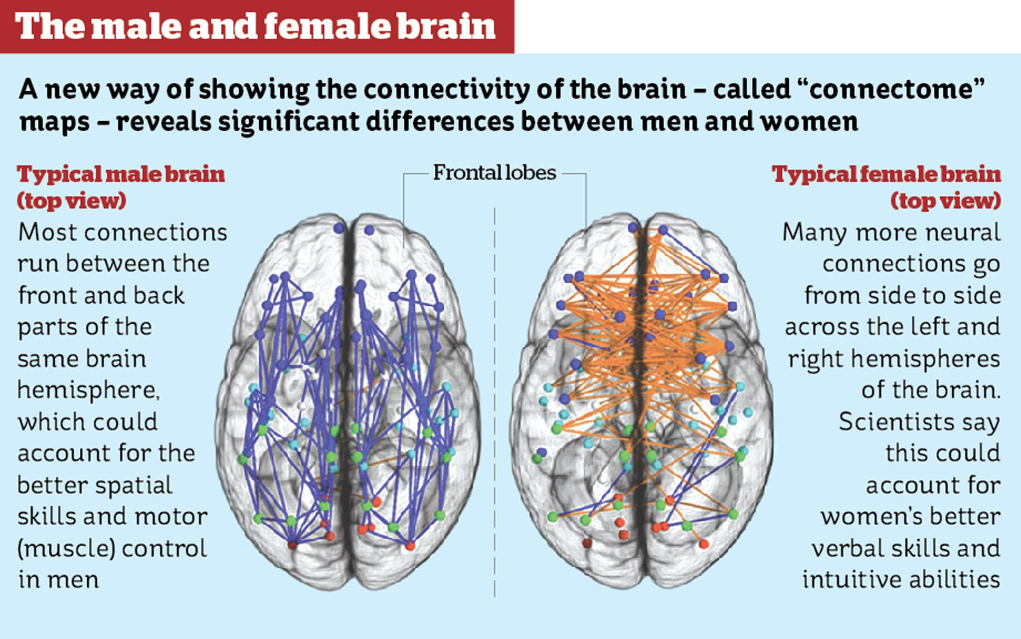 Female Brain Wiring Diagram - Example Electrical Wiring Diagram •