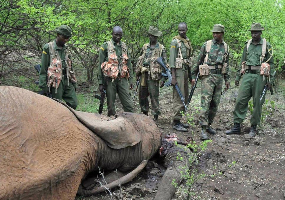 10 Things You Need To Know About Elephant Poaching The Independent