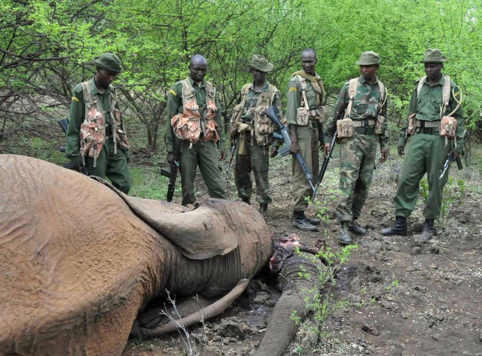 Kenyan game rangers with the carcass of an elephant killed by poachers