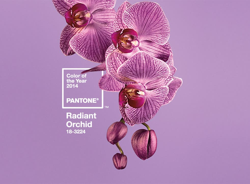 Radiant Orchid: The colour of 2014 according to Pantone
