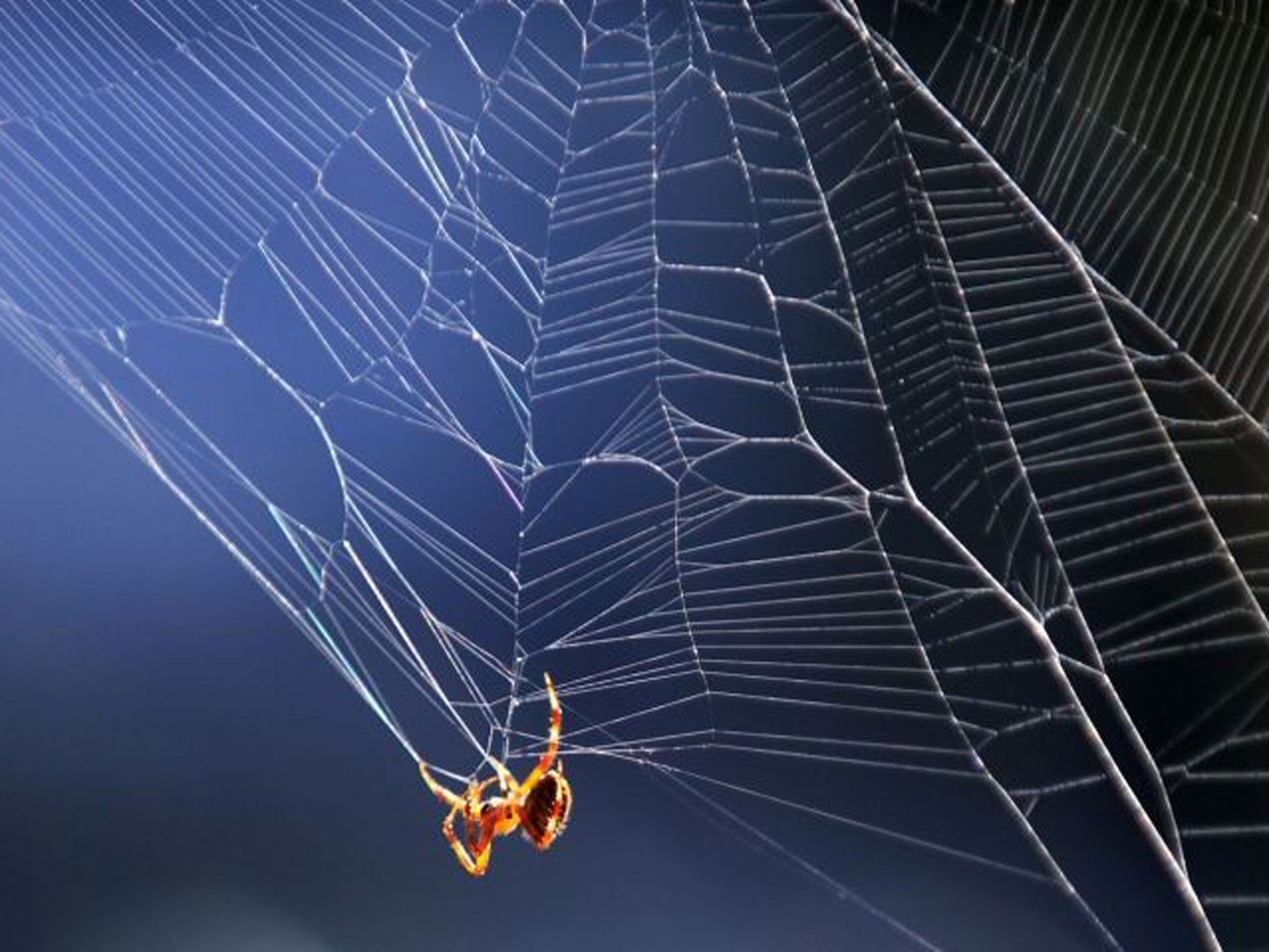 Image result for photo of spider and web