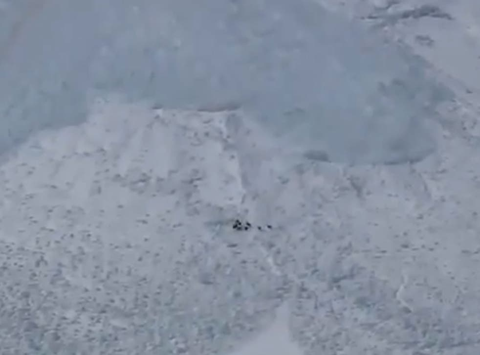 YouTube footage shows Chamois goats about to be engulfed by an avalanche in the French Alps