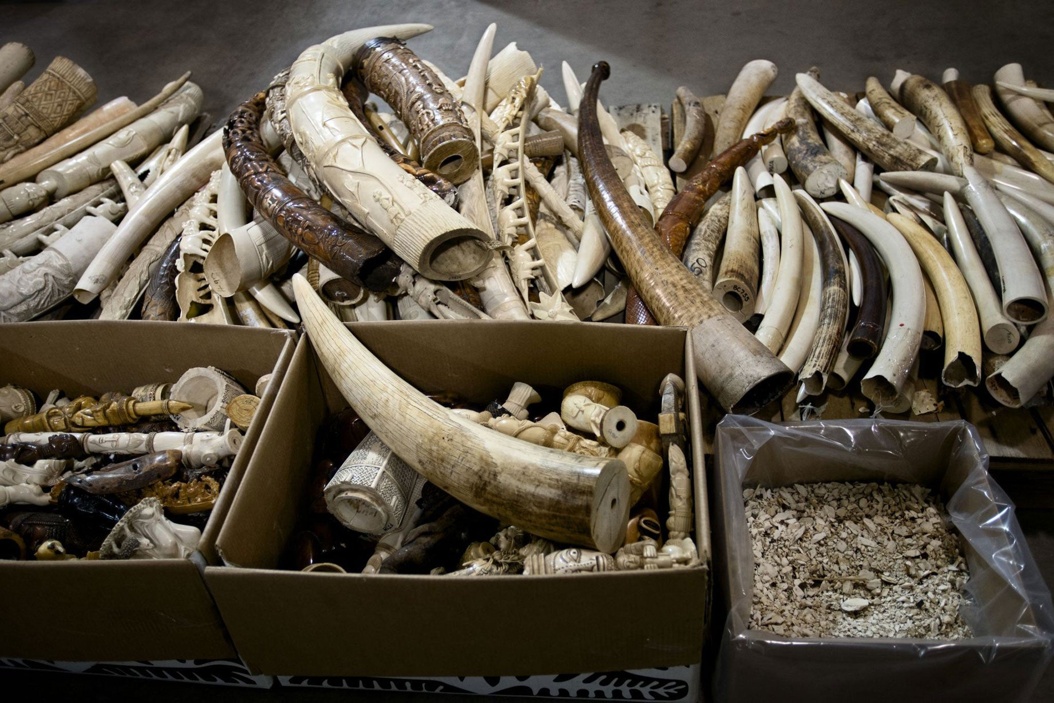 Elephant Ivory Art