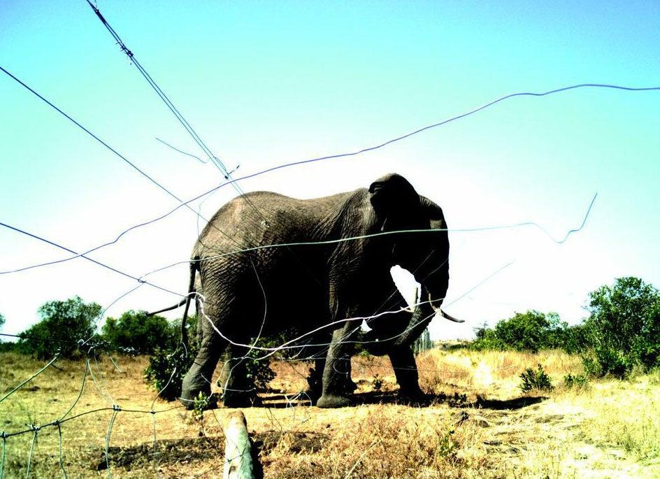 elephantfence 2009.jpg