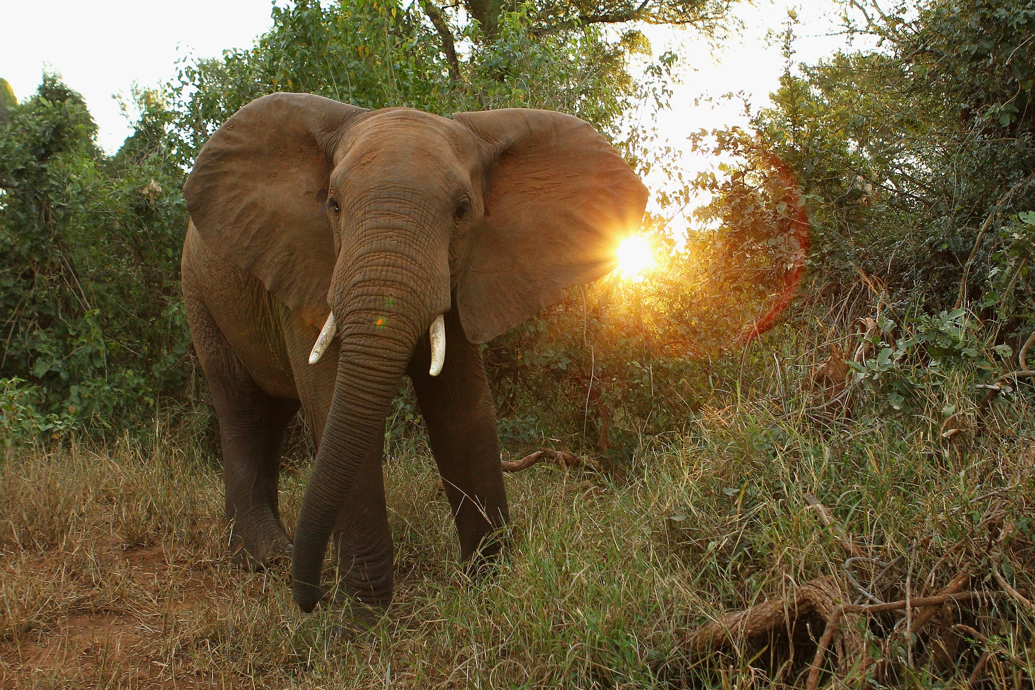Elephant Appeal: The continent I fell in love with may be changed ...