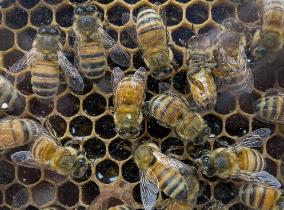 Thieves stole the beehive from a quaint  community garden in Norwich shortly before Christmas, police said