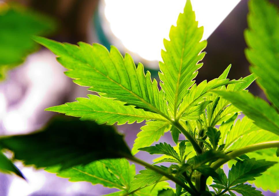 aaaa cannabis delivery