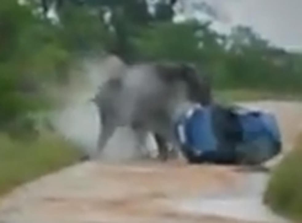 The moment the elephant overturns a car