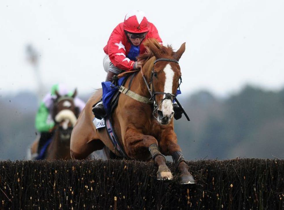 Rising star: Sire De Grugy will contest the Queen Mother Champion Chase