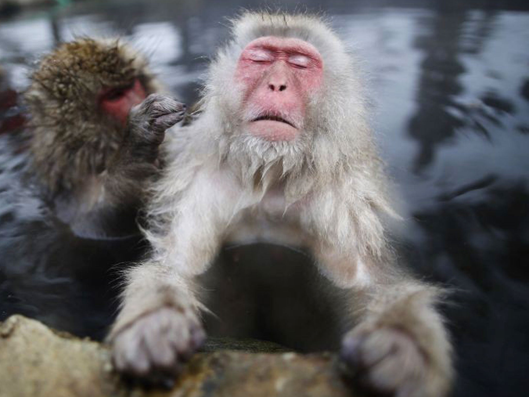 Nake sex with monkey
