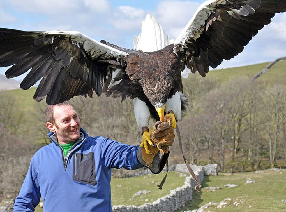 The steller sea eagle can be 8ft in wing-span