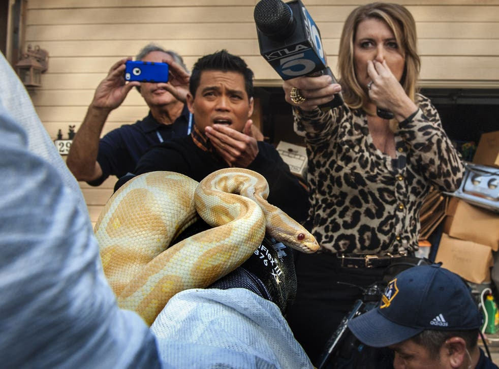 While interviewing  Sondra Berg, Santa Ana Police Animal Services supervisor, television reporters Bobby DeCastro, from FOX11, and Wendy Burch, of KTLA 5 plug their noses to avoid the stench emanating from the house with of dead and decaying snakes in San