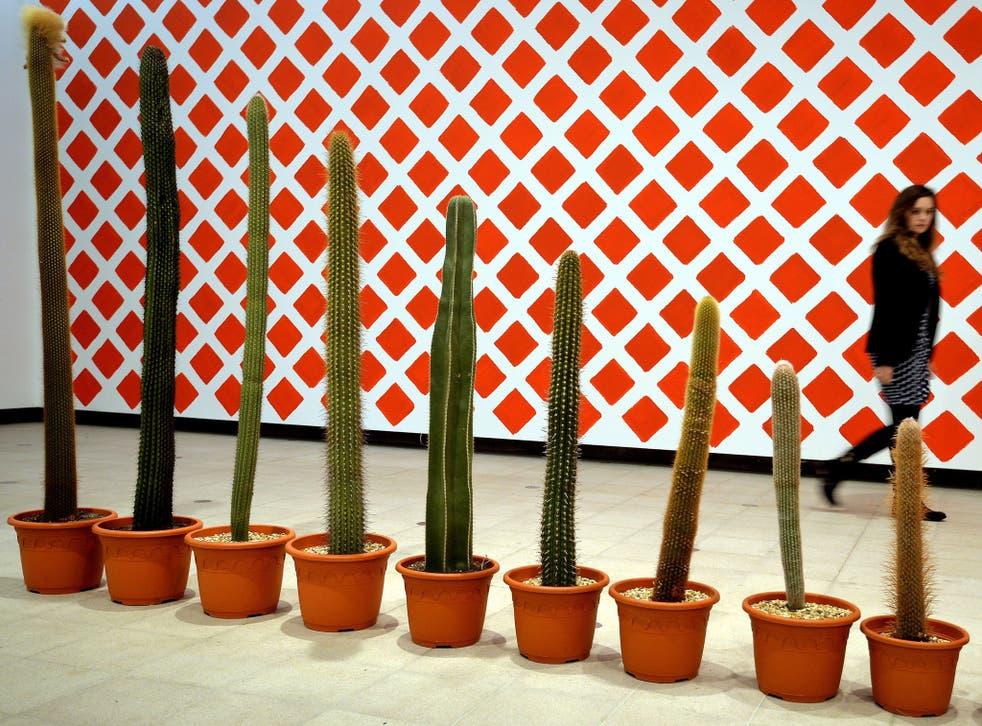 A row of ever smaller Cactus plants
