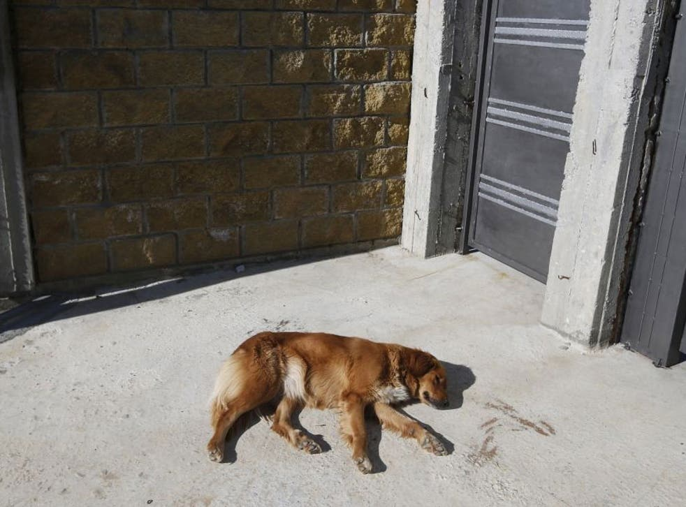 A stray dog sleeps on a road near Olympic Park in Sochi, Russia