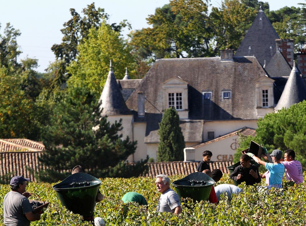 Workers pick grapes at Chateau Haut Brion near Bordeaux, where overall wine production is set to drop by 23 per cent