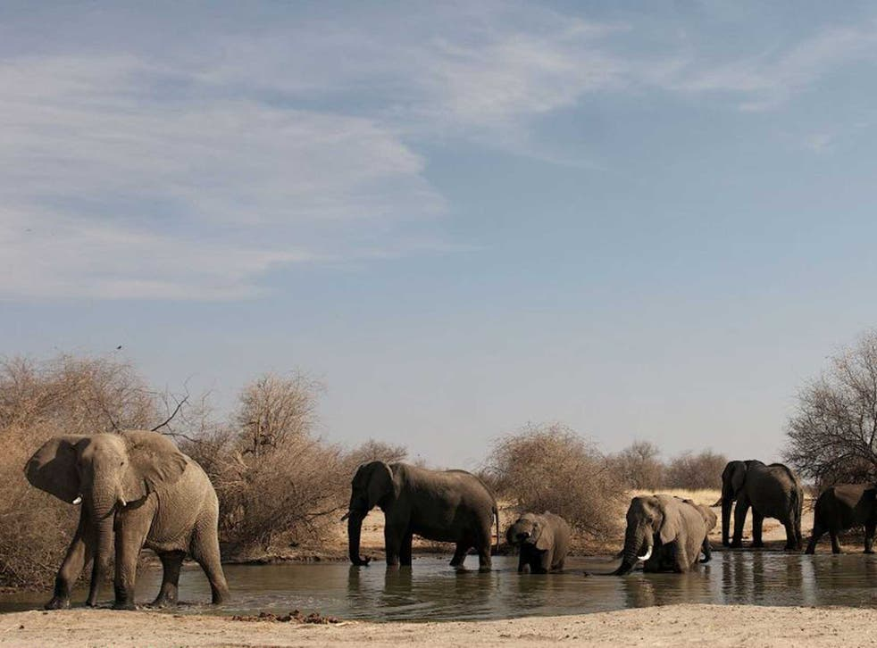 A chance to save: A major international conference will bring together all the key states involved in the illegal wildlife trade