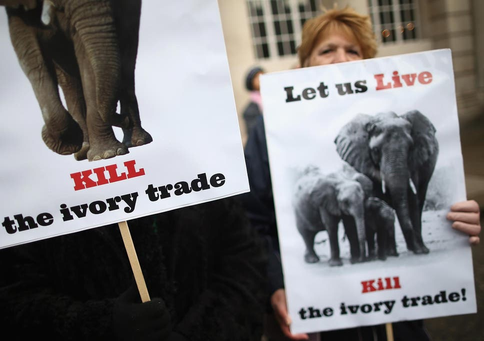 World Leaders Say Enough Is Enough On Illegal Ivory Agreement To