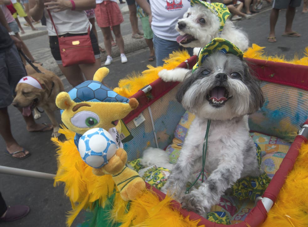 """Dogs stand next to 'Fuleco', the official mascot of the 2014 FIFA World Cup, during the """"Blocao"""" dog carnival in Rio de Janeiro"""