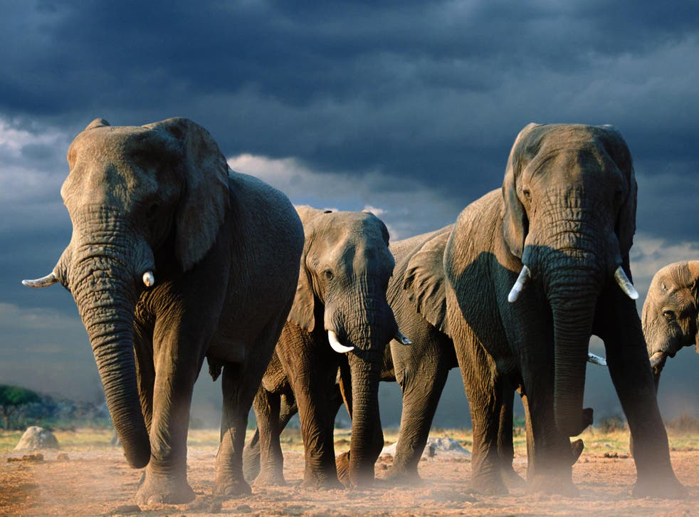 The Elephant Appeal raised a clamour ahead of the conference last week