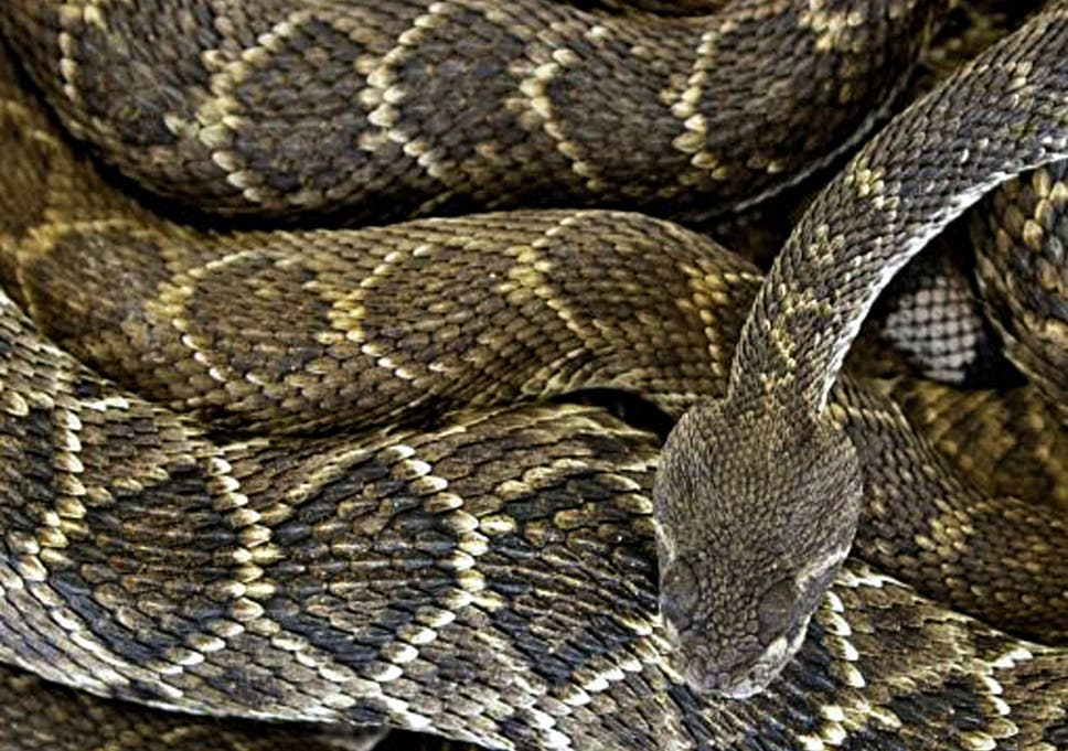Simon Calder: Snakes alive, but not for long – in Texas at