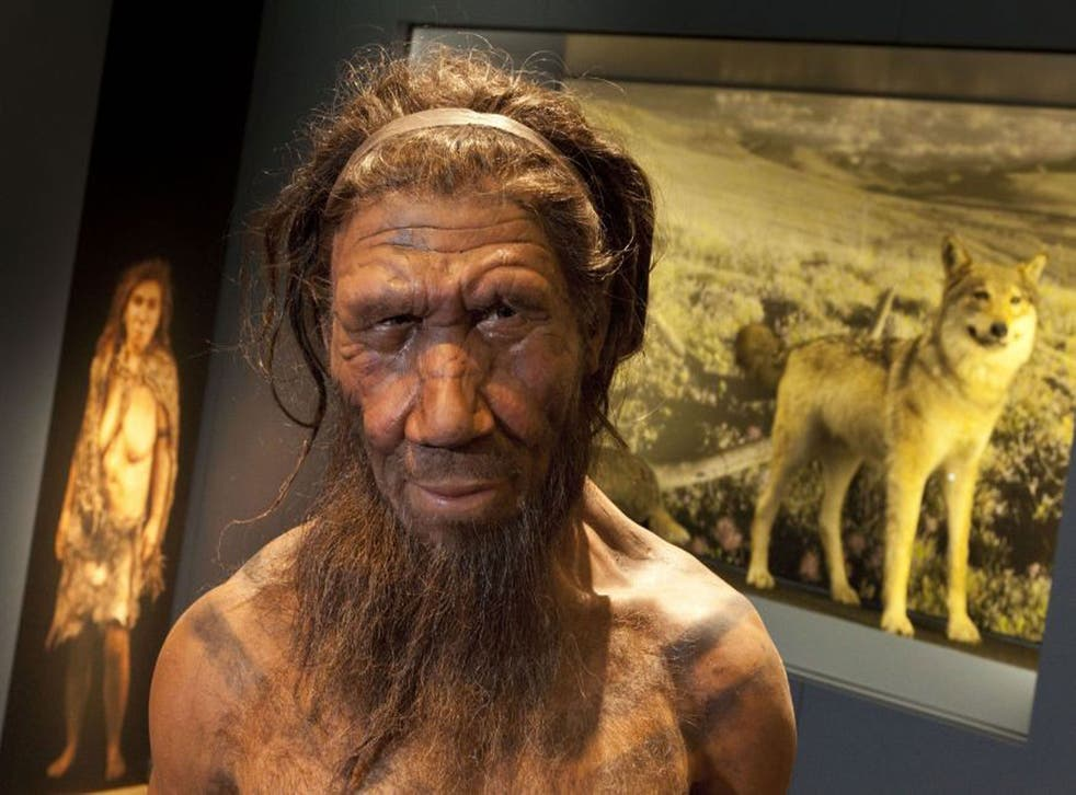 A Neanderthal model on display at the Natural History Museum