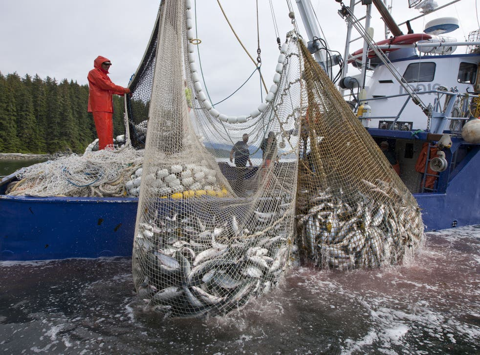 Tesco accused of 'hypocrisy' for stocking a cut-price brand of tuna caught using huge purse seine nets which can catch anything in their path